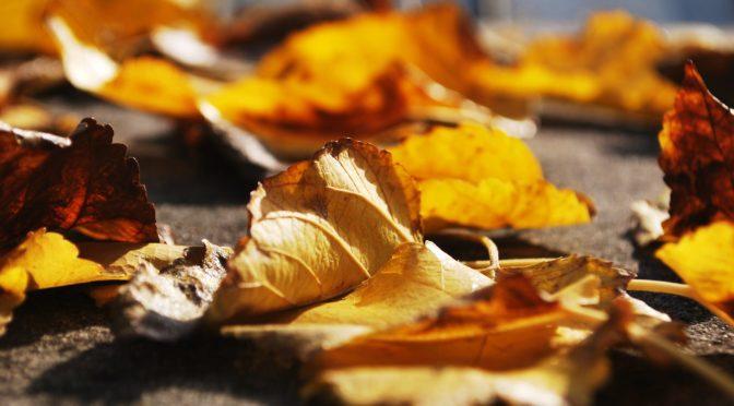 Eventi farfallino autunno